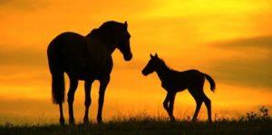 dwa_konie
